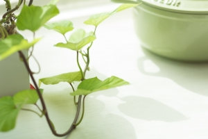 screening2の植物挿絵です