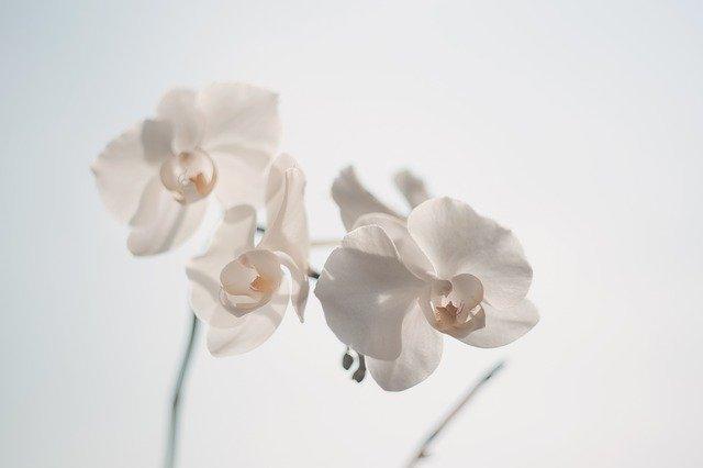 staff1日記差し絵のお花です